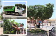تواصل مصلحة النظافة التابعة لجماعة زايو عملية تشذيب وتقليم الأشجار الكثيفة
