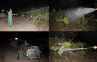 بالصور .. جماعة زايو تقوم بحملة لرش المبيدات لمعالجة نبات الصبار المصاب بالحشرة القرمزية