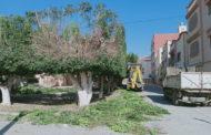 جماعة زايو تواصل عملية تشذيب الأشجار