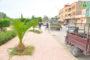 مصلحة النظافة والأغراس التابعة لجماعة زايو تقوم بعملية تقليم أشجار النخيل بشارع النصر