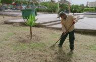 تنظيف وتقليم أشجار حديقة 20 غشت